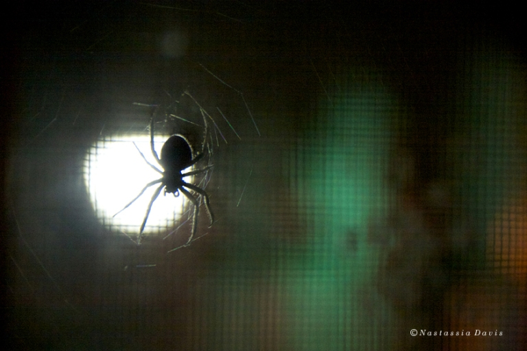 Millicent & Her Web At Night